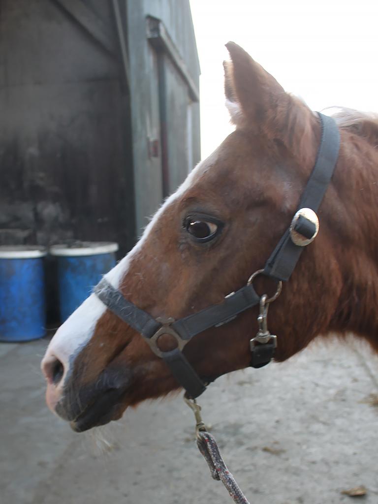 Onze beesten - Manege de Mustang - onze manegepony's en ...